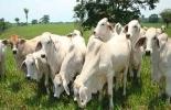 Con la prevención de la hambruna animal se busca no tener época de 'vacas flacas' durante la sequía