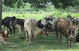 ganadería y sequía