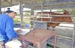 Pesaje de ganado