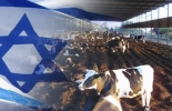 Israel estará presente en Agroexpo 2013