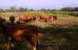 Entidades se unen para conservar el Hartón del Valle en el país