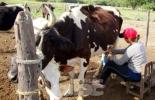productores leche en colombia