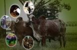 Alternativas medicinales para el ganado.