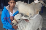 Jóvenes ganaderos
