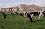 emisiones de gas invernadero por la ganadería