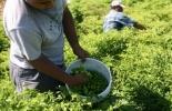 Producción agrícola en Colombia