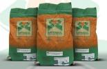semillas safrasul