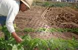 Expectativas tecnológicas del agro para 2014