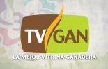 Tv Gan