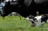 bienestar animal en colombia