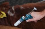 Vacunación bovinos.