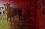ganadería, ganadería colombia, noticias ganaderas, noticias ganaderas colombia, contexto ganadero, rusia, rusia 2018, mundial, Ganadería, mundial 2018, mundial rusia 2018, rusia y colombia, carne colombiana en rusia, exportaciones colombianas a rusia, venta de carne a rusia, rusia importa carne colombiana, comercio entre rusia y colombia .