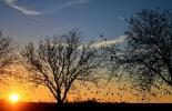 """Fondo Mundial para la Naturaleza (WWF), El informe """"Planeta Vivo"""" de WWF, Disminución de individuos, degradación de los hábitats representa la amenaza más destacada, Pérdida de especies, Bosques en declive, Océanos agotados, Ganadería, ganadería colombiana, noticias ganaderas, noticias ganaderas Colombia, CONtexto ganadero"""