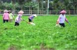 China, China prioriza el desarrollo agrícola y rural, leche,contexto ganadero, noticias ganaderas, agricultura
