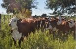 Ganadería, ganadería colombia, noticias ganaderas, noticias ganaderas colombia, CONtexto ganadero, huella de carbono, huella de carbono en la ganadería, ganadería Argentina, producción de carne, reducir la huella de carbono, INTA, carne Argentina, ganado argentino, cría de ganado argentino