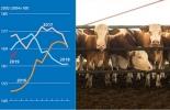 FAO, Indice de alimentos FAO, fuertes aumentos en los productos lácteos en febrero de 2019, Contexto ganadero, noticias ganaderas, leche, carne