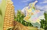 Importación maíz Colombia 2019, producción maíz Colombia, producción maíz Estados Unidos, exportaciones maíz Estados Unidos, importación maíz México, méxico, Colombia, Ministerio Agricultura Colombia, productores, maíz, cereales, estadísticas maíz, CONtexto ganadero, ganaderos colombia, noticias ganaderas colombia