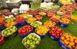 ganadería, ganadería colombia, noticias ganaderas, noticias ganaderas colombia, contexto ganadero, FAO, OCDE, precio de los alimentos, producción de alimentos, costo de los alimentos,