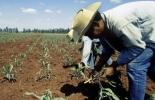 ganaderis, ganaderia colombia, ganaderia colombiana, noticias ganaderas, noticias ganaderas colombia. contexto ganadero, ganaderos colombia, ganaderos, mexico, maiz mexico, trigo mexico, MásAgro México, proyecto másagro mexico, agricultores mexicanos, maiz y trigo mexico
