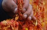 Ganadería, ganadería colombia, noticias ganaderas, noticias ganaderas colombia, CONtexto ganadero, Perú, agro perú, crecimiento agro perú, perú covid-19, crecimiento agro peruano 2020