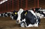 ganadería, ganadería colombia, noticias ganaderas, noticias ganaderas colombia, contexto ganadero, plasma vacas, tratamiento covid-19 con vacas, plasma de vacas covid-19, experimiento con vacas covid-19, cnn, sap, sab tratamiento plasma vacas,