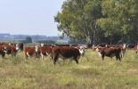Ganadería, ganadería colombia, noticias ganaderas, noticias ganaderas colombia, CONtexto ganadero, ganaderos uruguay, exportaciones uruguay, carne uruguaya, buenas prácticas ganaderas uruguay, tecnología agropecuaria uruguaya