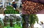 Ganadería, ganadería colombia, noticias ganaderas, noticias ganaderas colombia, CONtexto ganadero, Perú, agroexportaciones de perú, agro peruano, exportaciones agropecuarias de perú
