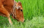 Ganadería, ganadería colombia, noticias ganaderas, noticias ganaderas colombia, CONtexto ganadero, ganadería sustentable, apuestas de ganadería sostenible, Chile, Ganadería Sostenible, ganadería sustent
