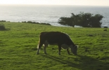 Proyecto Clear, reducir metano vacas, Metano en vacas, emisión de metano en ganadería, reducir emisiones de metano, CH4, vacas CH4, vacas metano, bovinos metano, Ganadería emisión GEI, emisión gases efecto invernadero, Ganadería Sostenible, ganadería sostenible Colombia, gases de efecto invernadero, ganaderos, ganaderos colombia, ganado, bovinos, ganado bovino, Ganadería, ganadería colombia, noticias ganaderas, noticias ganaderas colombia, CONtexto ganadero, contextoganadero