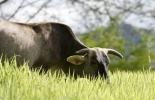 Neutralidad climática ganadería, carbono neutro ganadería, cambio climático ganadería, gases de efecto invernadero, emisiones ganadería, carbono neutro, ganadería medio ambiente, beneficios ganadería medio ambiente, cumbre alimentaria ONU, ganado bovino, ganadería bovina, carne, leche, ganaderos, ganaderos colombia, ganado, vacas, vacas Colombia, bovinos, Ganadería, ganadería colombia, noticias ganaderas, noticias ganaderas colombia, CONtexto ganadero, contextoganadero