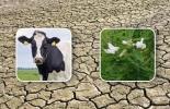 ganadería en tierra árida