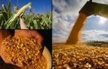 La medida fue adoptada tras el ministerio de Agricultura exigir fin a cualquier daño provocado por las crecientes importaciones de maíz provenientes del país vecino.