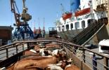 Las exportaciones de ganado vivo a ese país crecieron un 51.5% durante el primer semestre de 2012.