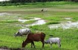 Supermercados en Brasil no venderán carne de ganado criado en selva amazónica