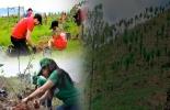 Ganadería, ganadería colombia, Ganadería colombiana, CONtexto ganadero, noticias ganaderas, noticias ganaderas colombia, refoestación, deforestación, siembra de árboles, arboles sembrados, sembratón, ganaderos, ganaderos colombia