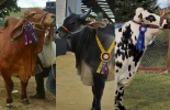 Ferias ganaderas en Colombia
