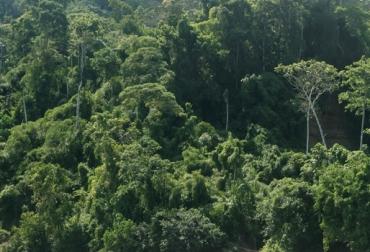 Paisaje Sostenible Amazonas