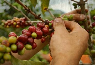 carga de café colombia