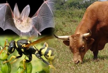 Animales que preservan el medio ambiente