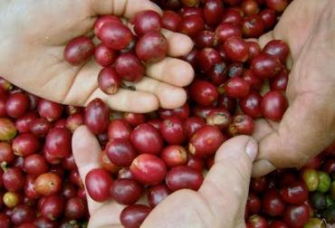 Producción café