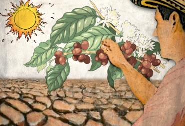 afectaciones sequía cafeteros