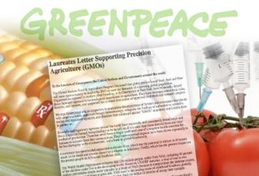 alimentos transgenicos greenpeace