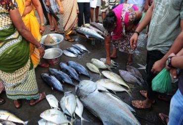 pesca en el mundo, pesca en el mundo noticias, pesca en el mundo cifras, fao pesca en el mundo, contexto ganadero