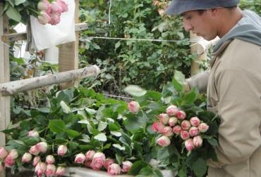 flores colombia economía