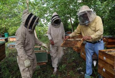 USAID, USAID programa Oro Legal, USAID programa Oro Legal apicultura, USAID programa Oro Legal apicultura en  Bajo Cauca Antioqueño. USAID apicultura Colombia, CONtexto ganadero, ganadería Colombia