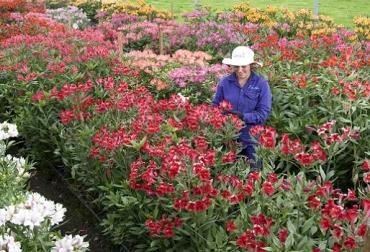 Colombia, exportaciones de flores, Asocolflores, CONtexto Ganadero, ganadería Colombia