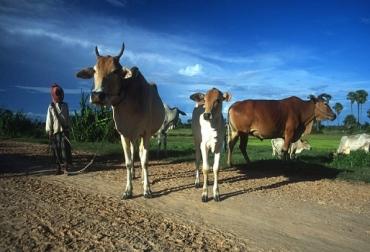 Antimicrobianos, amr, resistencia antimicrobiana, alimentos inocuos, producción alimentaria, FAO, buenas prácticas agrícolas, calidad de los alimentos, alimentos sanos, ganadería sostenible, producción sostenible, contexto ganadero, noticias ganaderas colombia