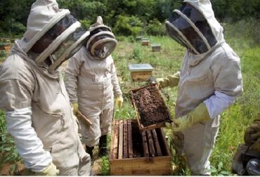 Colombia, apicultura, Bajo Cauca, USAID, Programa Oro Legal USAID, Asapibas, Se fortalece la apicultura en el Bajo Cauca, CONtexto ganadero, ganadería Colombia, Noticias ganaderas Colombia