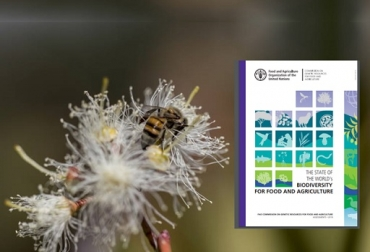 Fao, biodiversidad, pérdida de la biodiversidad, La biodiversidad desaparece de día en día, estudioEl estado de la biodiversidad para la alimentación y la agricultura en el mundo, Director General de la FAO, José Graziano da Silva, CONtexto ganadero, noticias ganaderas, agricultura