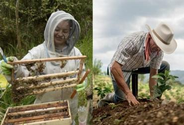 ganaderia, ganaderia colombia, ganaderia colombia, contexto ganadero, noticias ganaderas, noticias ganaderas colombia, apicultura, agricultura, jornadas camara procultivos, talleres andi, camara procultivos andi, agricultores colombia, apicultores colombia, ganaderos, ganaderos colombia